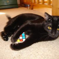 Felix pawing at the cube